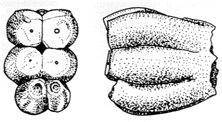 image specimen